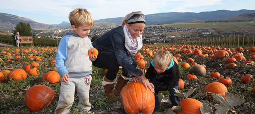 Pumpkin Festival at Davison Orchards